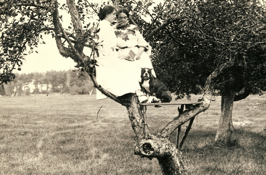 Helen Keller and Anne Sullivan sit on a wooden platform built on a low branch of a tree. Helen's dog Phiz sits at their feet.