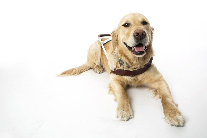 September is National Guide Dog Month, a time to recognize and appreciate the hard working pups who help people who are blind lead independent lives.